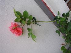 Plastová príchytka na stenu pre popínavé rastliny