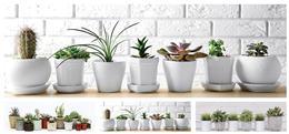 Obraz s bielymi kvetináčmi s kaktusmi