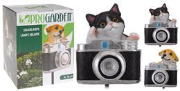 Pes, mačka s fotoaparátom, solárny